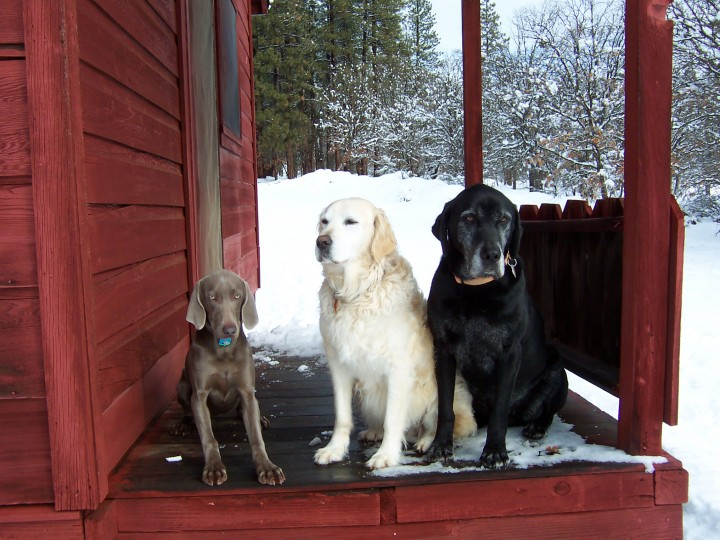 Maggie, Jake and Tucker