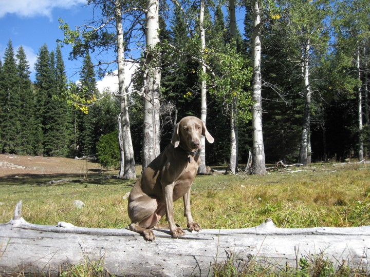 Maggie balancing on log at Aspen groove