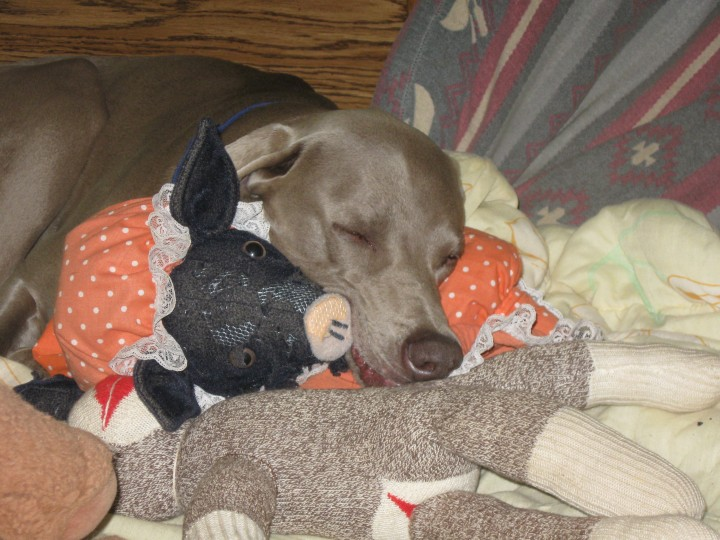 Blink asleep on stuffed animals