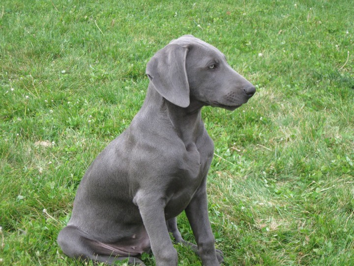 Hank at 4 months