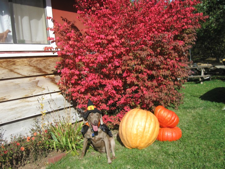 Maggie in her Pilgrim costume