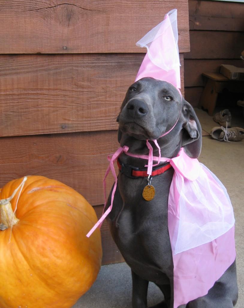 Hank Halloween trim
